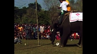Elephant Soccer - Video