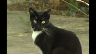 Martin County deputies searching for person who injured and killed at least six cats - Video