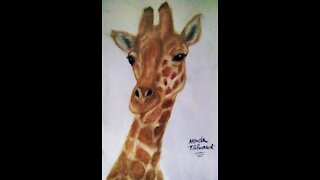 Drawing Giraffe