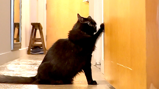 Compilation shows cat's extreme hatred of closed doors - Video
