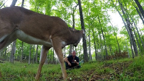 Man crunches apples in forest, deer comes to share