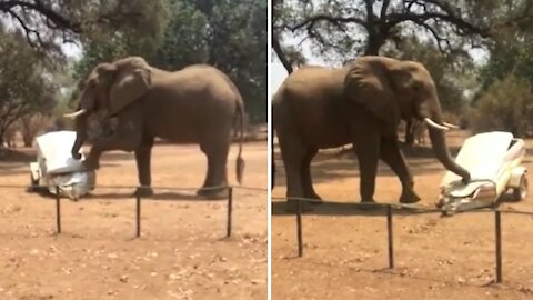 Elephant goes on destructive rampage, completely destroys vehicle