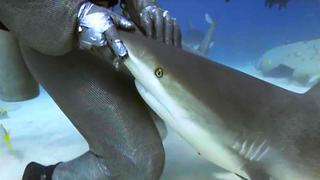 Get Schooled in Shark with 6 Shark Week Facts - Video