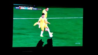 Cute Kittens Watch The World Cup - Video