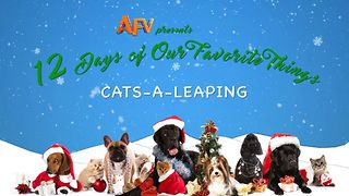 AFV's 12 Days of Christmas Leaping Cats - Video