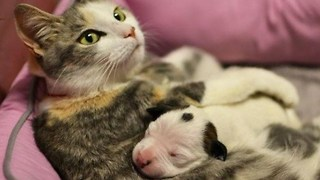 Cat Adopts Abandoned Puppy - Video