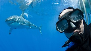Shark Selfie: Diver Poses With Great White - Video