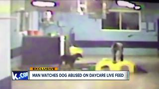 Video shows worker at dog daycare in Tallmadge kicking dog - Video