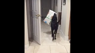 Clever Dog Steals His Snacks Back - Video