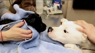 Michigan Humane Society Rescues Puppies from Under Abandoned Home - Video