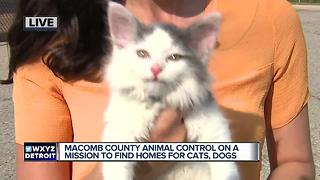 Macomb County Animal Control on a mission to find homes for cats and dogs - Video