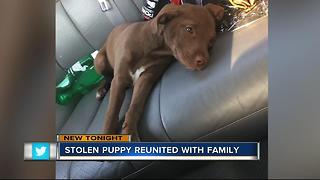 Puppy stolen from woman's car while she waited at a stop light found