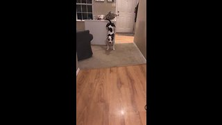 Dog Pulls Off Impressive Trick For Her Dinner
