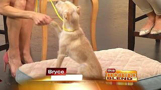 NSPCA Rescue Dog Shakes TV Hosts Hand - Video