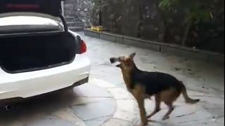 Clever dog understand what her owner is telling