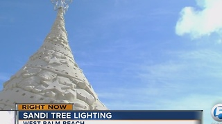 Sandi Tree lighting - Video