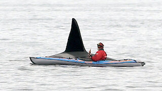 Extremely close orca encounter for kayaker in Northern Norway