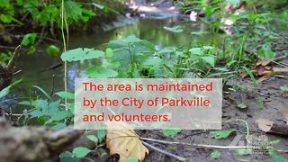 Parkville Nature Sanctuary - Video