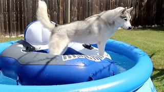 Husky chills on floatie in pool - Video