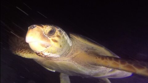 Scuba diver surprised to encounter giant sea turtle on the reef