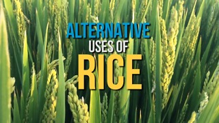 Alternative uses of rice - Video