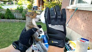 Man rescues orphaned baby squirrel and feeds it formula