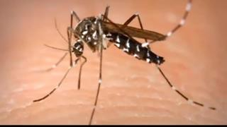 Canyon Co. continues to battle mosquitoes - Video