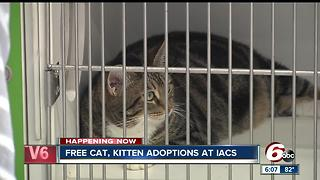 Adopt a cat or kitten for free through the weekend at Indy Animal Care Services - Video