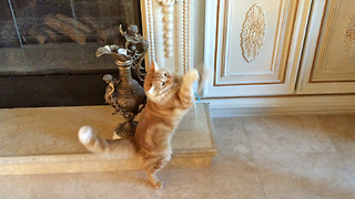 Crazy Cat goes wild with  Catnip Mouse - Video