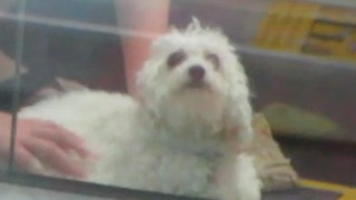 Dog Gets Stuck In Escalator!  Hero Firefighters save him! - Video