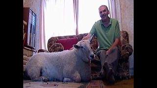 Man Lives With Sheep - Video