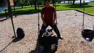 Swing Loving Chihuahua - Video