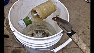 OMG! Best Mouse Trap Ever (So Simple) | You Must Try!