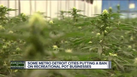 Cities work to come up with marijuana policies in wake of vote to legalize