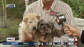 Pets of the week: Annie and Willie