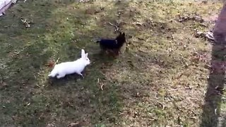 White Rabbit and Delightful Dog Explore Garden Together - Video