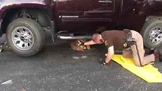 Deputy rescues buck trapped under truck in Hendricks County - Video