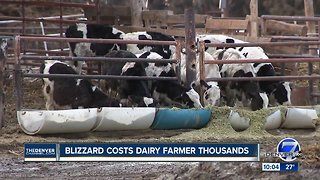 Colorado dairy farmer loses thousands of dollars as a result of recent blizzard