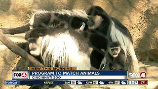 Cincinnati Zoo's program to match animals - Video