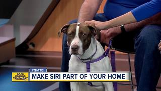 Jan. 13 Rescues in Action: Siri wants to call you friend - Video