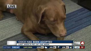 Pet of the week: Thelma - Video