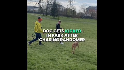 Dog Gets kicked in Park after chasing randomer