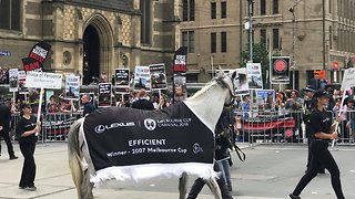 'Horse Racing Kills': Protesters Chant During Melbourne Cup Parade - Video