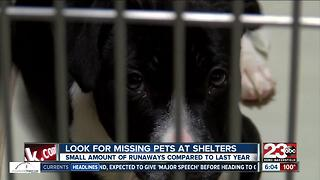 Look for missing pets at shelters - Video