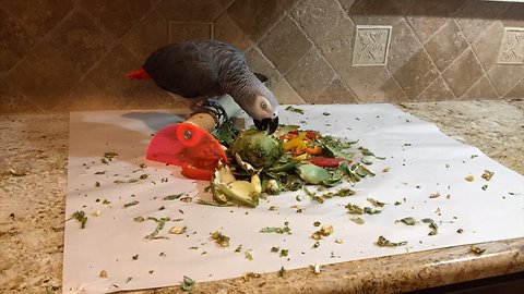 Time lapse captures parrot demolishing artichoke