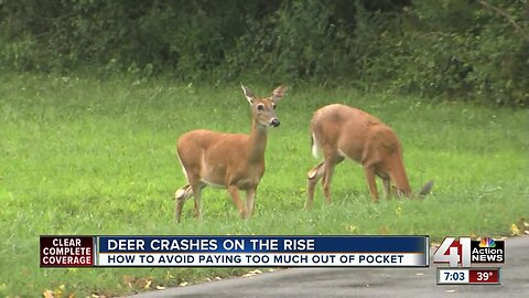 Deer crashes already on the rise