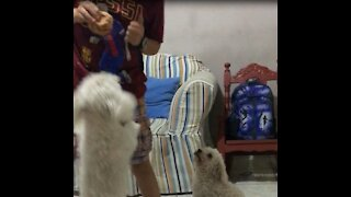 Puppy steals food while being teased