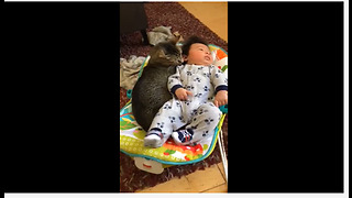 Sweet Kitty Preciously Cuddles With Baby Boy