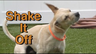 Shelter Dogs Shake It Like a Polaroid Picture - Video
