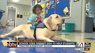 Therapy dog calms kids at Independence elementary school - Video